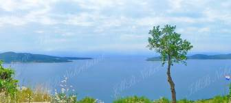 Farmland of 3700 m2 with a sea view - Dubrovnik surrounding